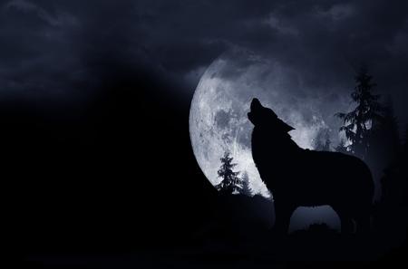 Wyjący Wilk ciemnym tle. Full Moon i na pustyni. Zdjęcie Seryjne