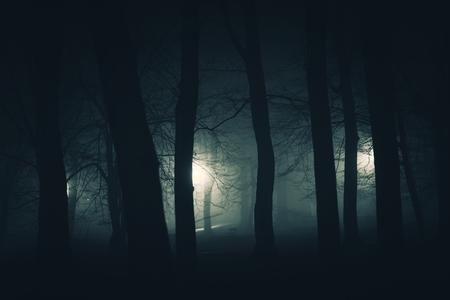 In the Dark Spooky City Park. Foggy Creepy Park at Night.