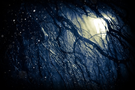 creepy: Winter Weather Background. First Snow at Night. Lonely Tree Branches in the Dark and Falling Snowflakes. Dark Blue Color Grading.