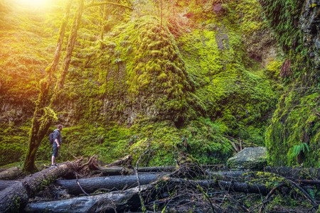 portland oregon: Oregon Mossy Gorge Hiker. Young Hiker on Fallen Logs Exploring Mossy Gorge. Stock Photo