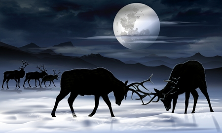 colorado mountains: Old Bull Elks Night Fight Art Illustration. Winter Mountain Landscape and the Wildlife.