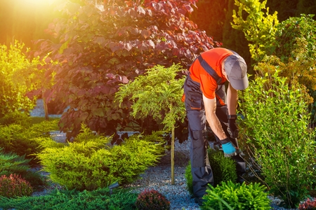 paysagiste: Gardener Caucasian au travail.