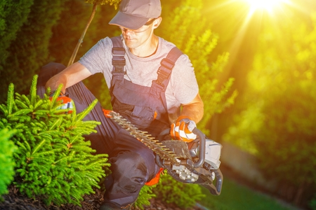 trimmer: Gardener at Work with Hedge Trimmer in His Hand. Stock Photo