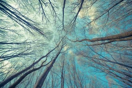 Bomen Web Achtergrond. Bosconcept Achtergrond.