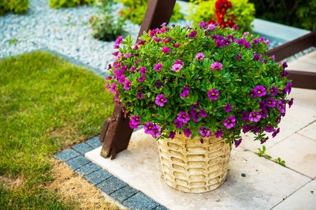 flowers garden: Decorative Garden Flowers. Flowers in Wattle Basket.