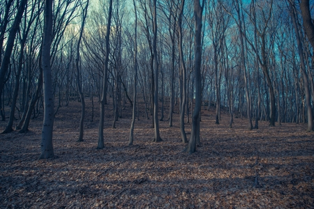 fall landscape: Spooky Forest Landscape Nature Background. Late Fall Forest Scenery.