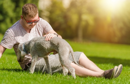 man's best friend: Men Playing with His Bedlington Terrier Dog  in the Park During Summer Day. Dog Mans Best Friend. Stock Photo
