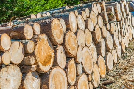 lumber industry: Lumber Industry Logging and Wood Storage Concept Photo. Stock Photo