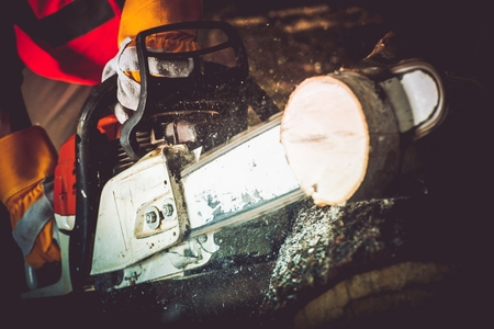 wood cutter: Logs Cutting Wood Cutter Closeup Photo. Gasoline Wood Cutter in Action. Stock Photo
