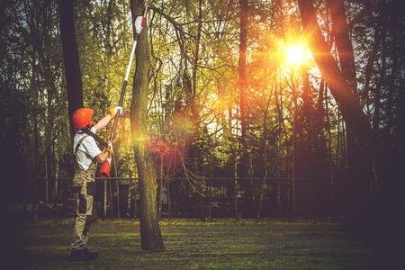 Branches d'arbres morts et dangereux de coupe par Extended Bûcheron. Professionnels Arbres Travailleur de coupe. Banque d'images - 56892293