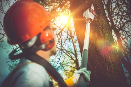 tree cutting: Tree Branches Pro Cutting. Unsafe Branches Removal by Extended Wood Cutter. Stock Photo