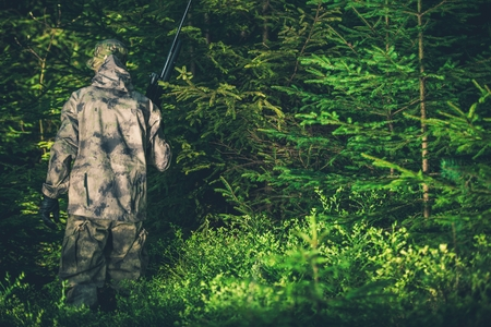 illegal: Illegal Hunting Poacher in the Forest. Poacher with Rifle.