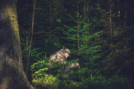 poaching: Hiding Poacher with Rifle in Deep Spruce Forest. Hunting Poacher. Poaching Theme.