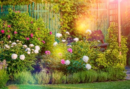 日当たりの良い開花裏庭の庭。夏の庭の花。