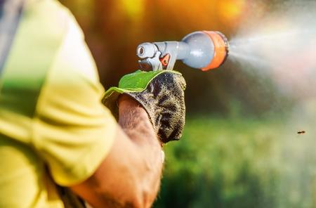 mangera: Riego de plantas de jardín de la manguera en la mano del jardinero del primer.