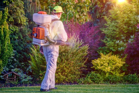 fungicide: Pest Control Garden Spraying by Professional Gardener Who Wearing Safety Wearing.