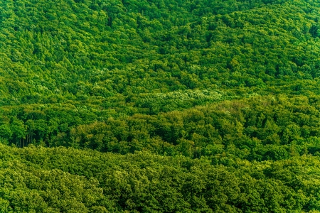 Dense Green Forest Nature Photo Background. Forestry Pattern.