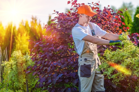Men Taking Care of Garden. Plants Cutting. Landscaping Works. Stock Photo