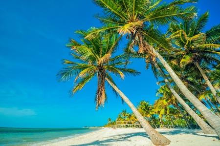 llave de sol: Tropical Beach with Palms. Beautiful Beach, Palms and the Ocean Scenery. Tropical Destination Theme. Foto de archivo