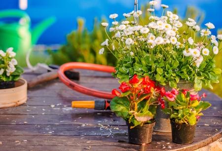 home and garden: Flower Works in Home Garden. Gardening Theme. Stock Photo