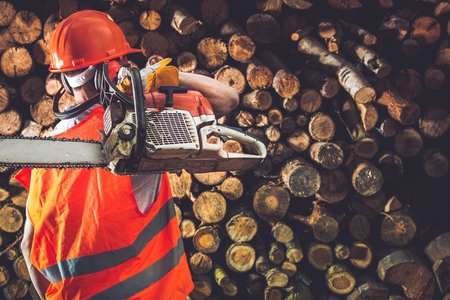 wood cutter: Professional Timber Worker with His Gasoline Wood Cutter.