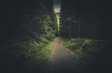 Dark Spruce Forest Alley. Mysterious Forest Trail.