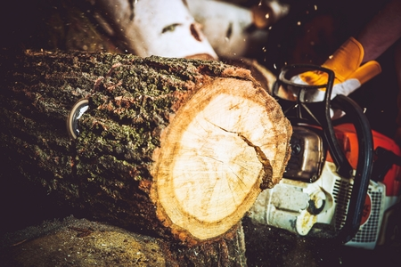 wood cutter: Wood Log Cut by Gasoline Wood Cutter. Closeup Photo. Forestry Works.
