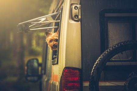 motorhome: Motorhome Traveling with Dog. Small Silky Terrier Dog in Camper Van Window. Dog in RV Motorhome. Stock Photo
