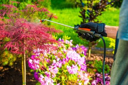 riesgo quimico: Control de plagas en el jardín. Rociar jardinero del jardín de flores. Foto de archivo