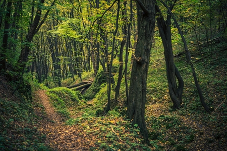 Forest Creek Scenic en été. Paysage de foresterie.