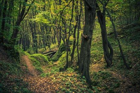 exteriores: Pintoresca cala de bosque en verano. Paisaje Forestal. Foto de archivo