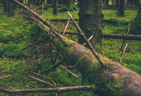 Fallen Mossy Tree in the Norwegian Forest. Forest Landscape.