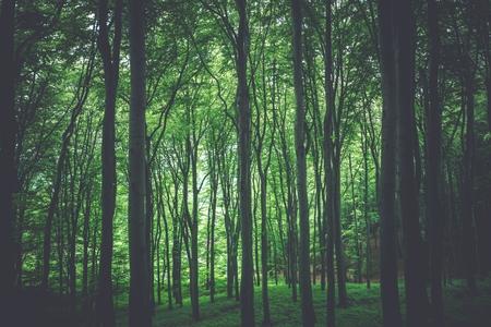緑の森自然写真の背景。林業のテーマです。