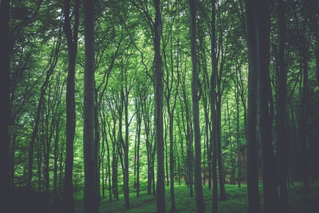 nature photo: Green Forest Nature Photo Background. Forestry Theme. Stock Photo