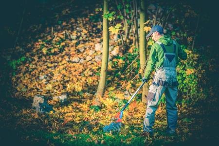 paysagiste: Gardener Feuilles Raking. Jeune, caucasien, Jardinier Paysagiste Jardin Nettoyage des feuilles à l'aide Rake. Banque d'images