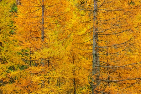 Fall Foliage Forest Closeup Photo. Autumn Forestry Colours. Stock fotó