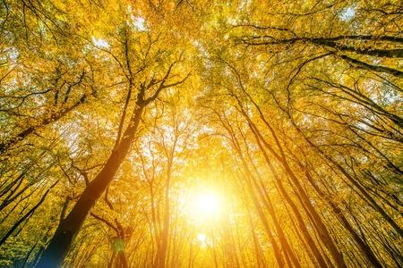 맑은 숲 숲 자연 사진 배경입니다. 화창한 가을 단풍