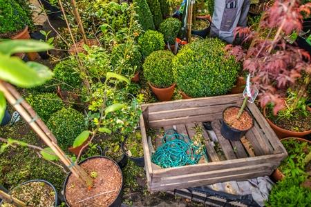 Aménagement paysager de stockage d'entreprises avec de nombreuses plantes décoratives de jardin, caisse en bois et outils