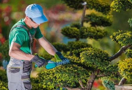 Topiary Gardener Plant Shaper at Work. Professional Gardener in the Beautiful Garden Full of Fancy Trees.
