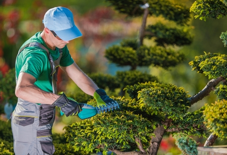 Topiary Gardener Plant Shaper at Work. Professional Gardener in the Beautiful Garden Full of Fancy Trees.
