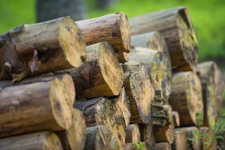 Pile of Large Wood Logs in the Forest. Timber Industry.