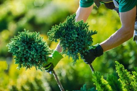 Magasin de jardin Achat. Concepteur de jardin caucasien choisissant les bonnes plantes pour son projet de jardin.