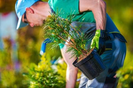 새로운 나무 심기. 그의 정원 프로젝트를위한 새로운 식물을 사는 정원사. 스톡 콘텐츠