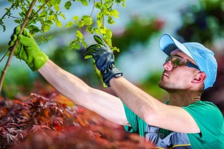 Caucasian Gardener Looking For Plant Diseases in the Garden.