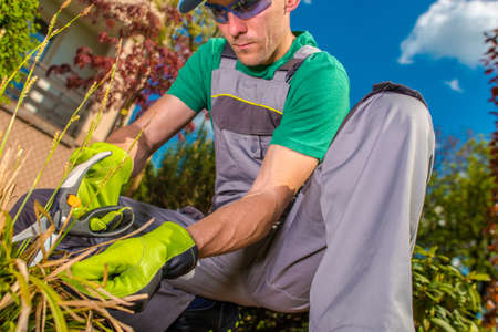 Caucasian Men Working in a Garden. Removing Dead Plant Leaves For Upcoming Summer Season. Imagens
