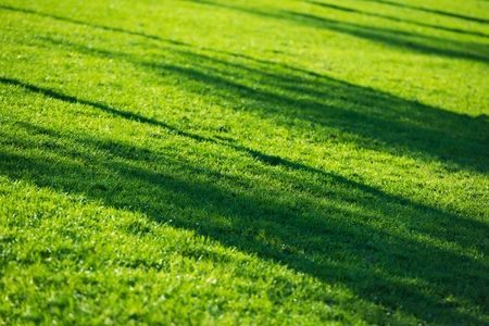 Grass Field and the Sun Light. Fresh Mowed Lawn Closeup. Stock Photo
