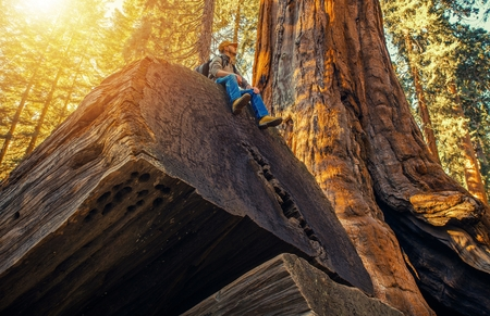Sequoia Forest Hiker. Caucasian Men Seating on Ancient Fallen Sequoia Tree Log. Exploring Kings Canyon and Sequoia National Parks in California, United States of America.