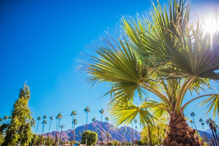 Coachella Valley Vegetation. Palm Springs, California, United States of America.  Stock Photo