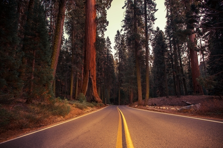 California Sierra Nevada Road. Giant Sequoias National Park. United States of America.
