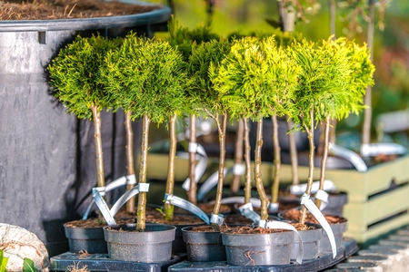 Planting Trees in the Garden. Gardening and Landscaping Theme. Reklamní fotografie